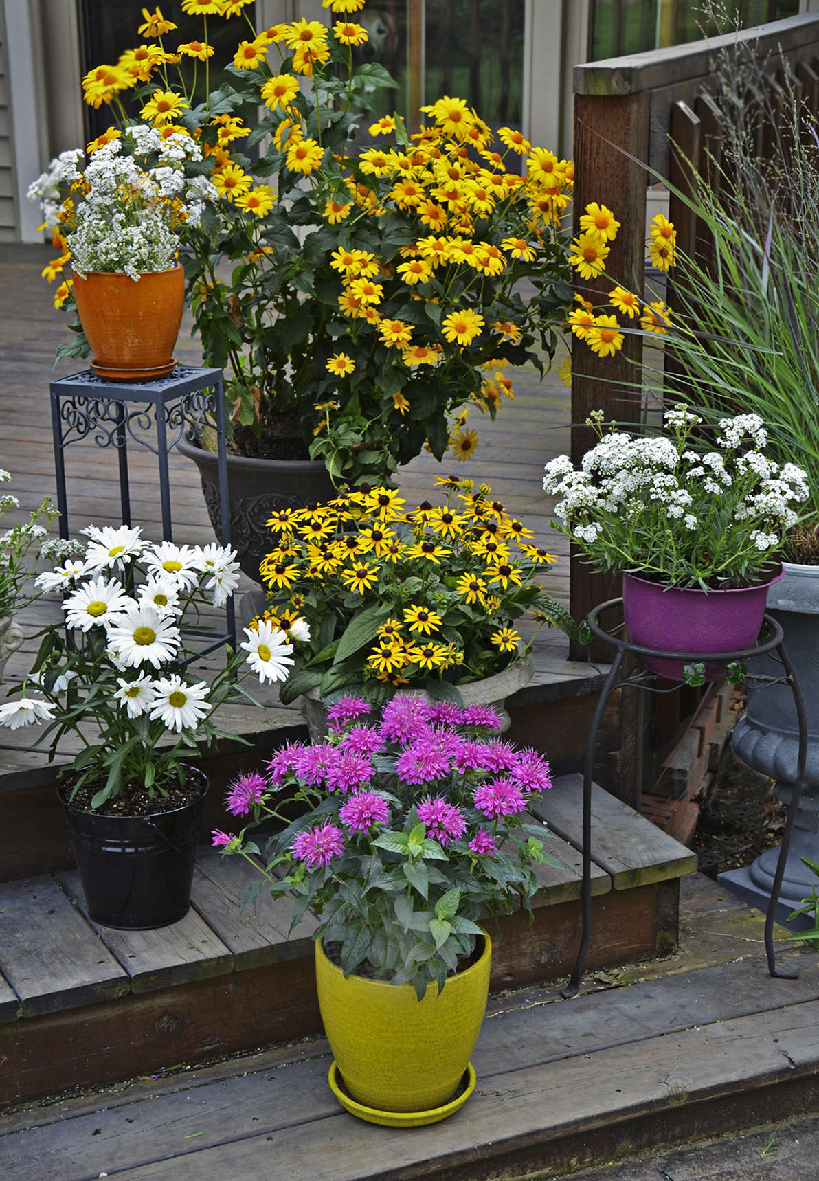 The Complete Guide To Growing Perennials In Containers