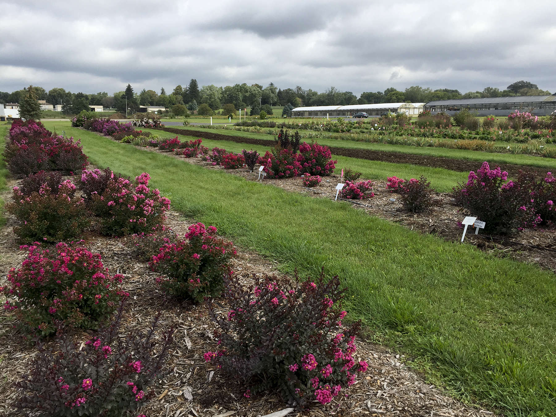 Hybridizers & Breeding Programs
