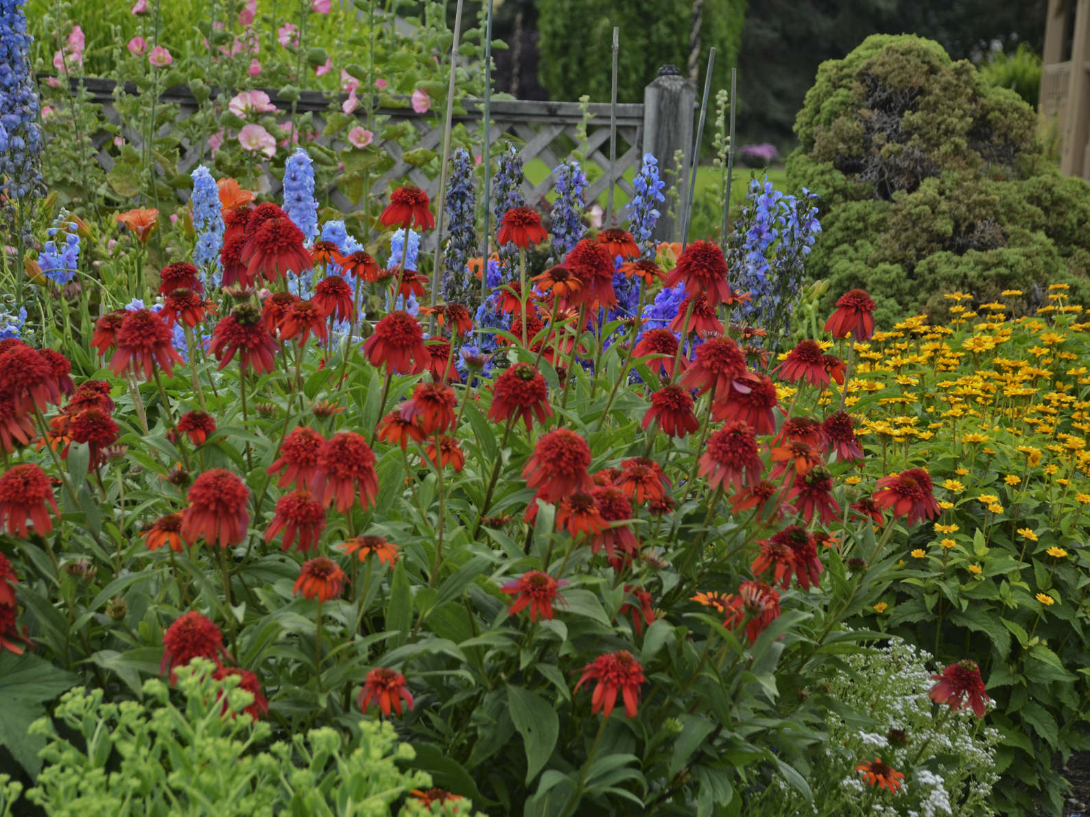 Perennials Have Enjoyed A Huge Surge Of Interest By Todayu0027s Gardeners In  Recent Years. Money Wise People Know That You Only Have To Buy A Perennial  Once, ...