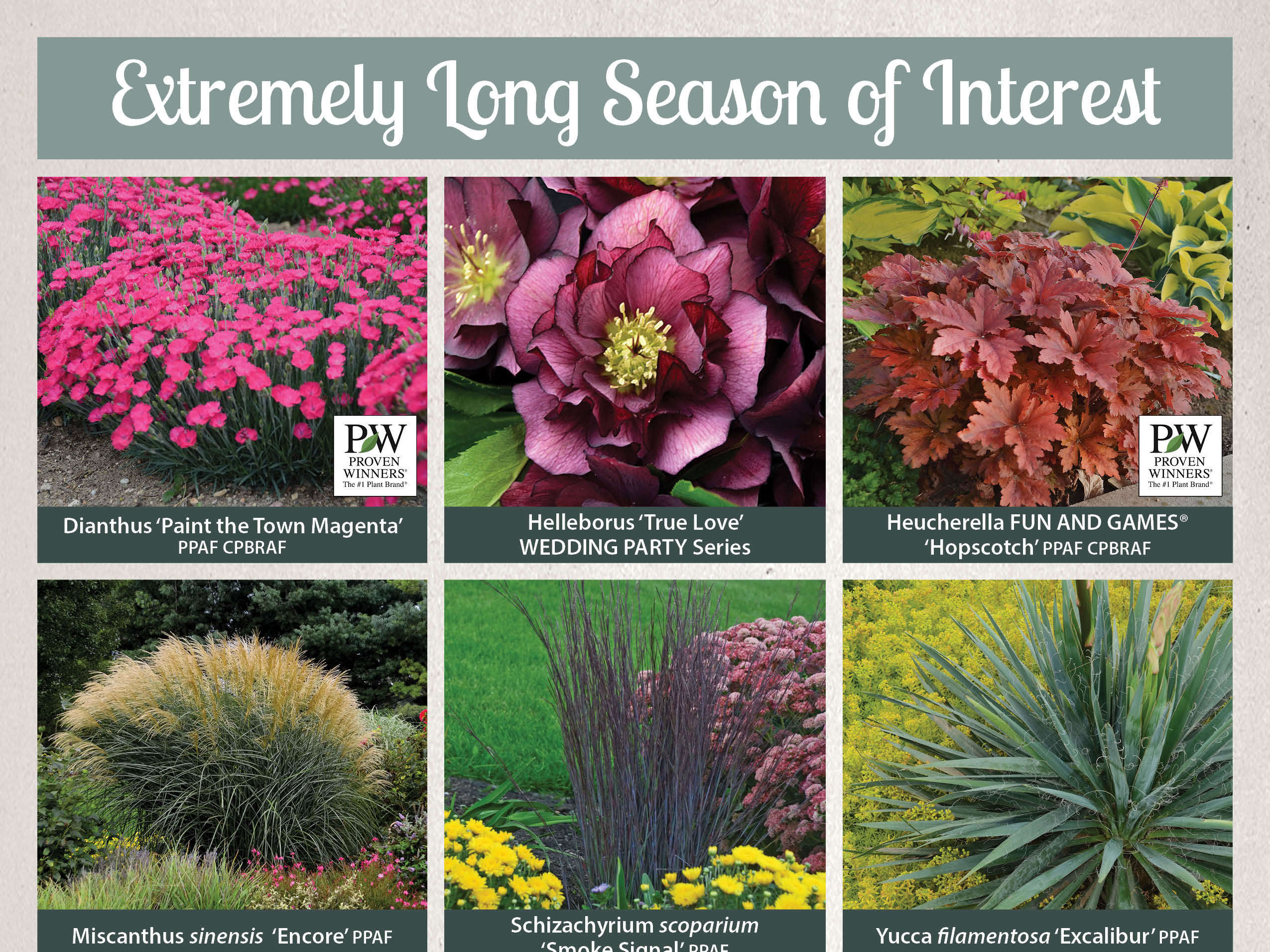 Photo Essay Extremely Drought Tolerant Perennials Perennial